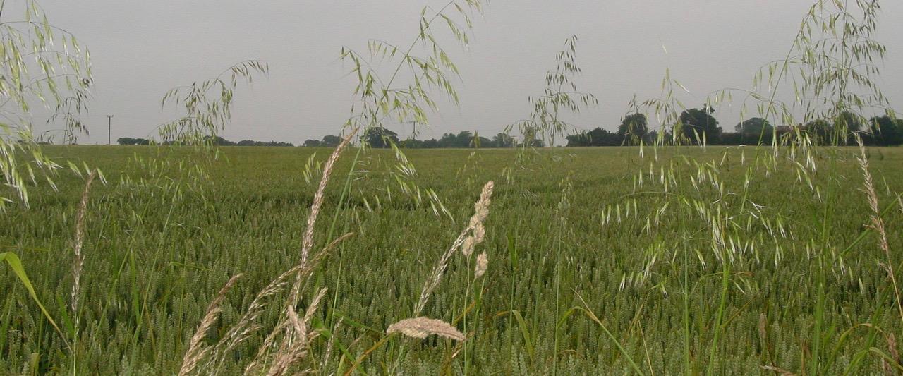 Shows fields outside Ringsfield Village, Suffolk